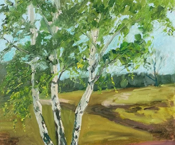 Birken in der Kirchdorfer Heide