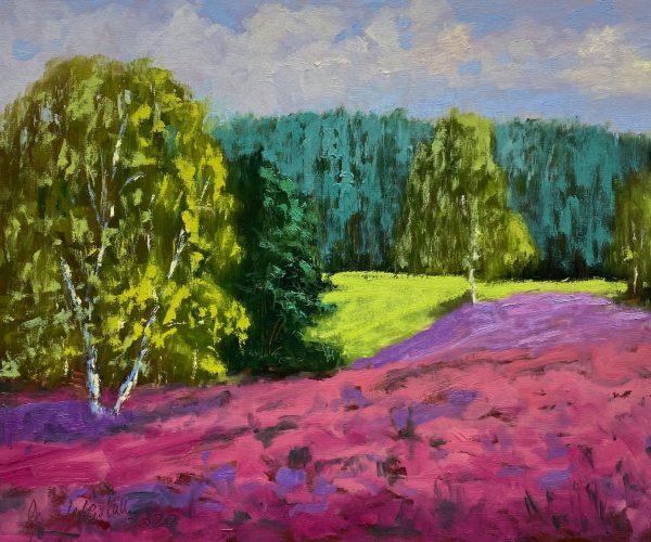 Heideblüte Kirchdörfer Heide